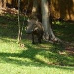 a Warthog at the hotel complex