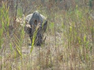 Rhino in Kruger Park