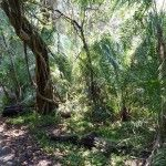 The small part of rainforest