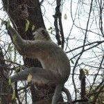 Again the monkey