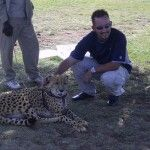 Petting a cheetah