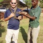Nice snake